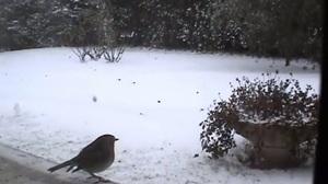 Le rude hiver des petits oiseaux