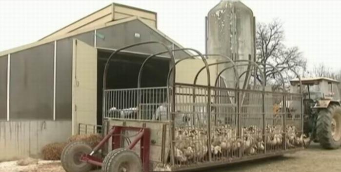 Capture d'écran vidéo France 24