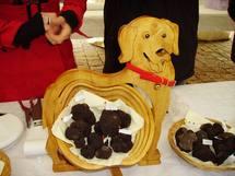 La truffe:une affaire de chien (Ph.Paysud)