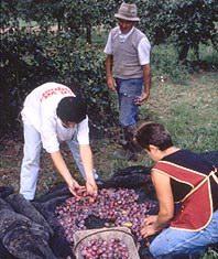 Opération de ferme en ferme en Lot-et-Garonne