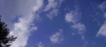 Climat et carbone : et si c'était une taxe pour rien?