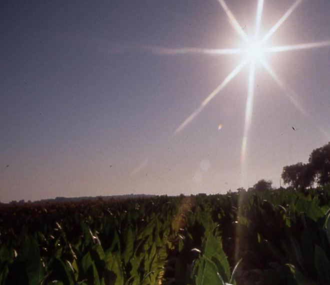 Coucher de soleil tabacole (ph R.D)