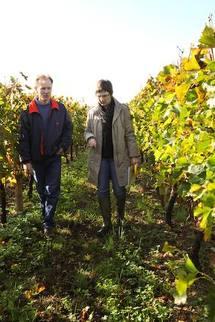 La Gironde viticole se met au bio
