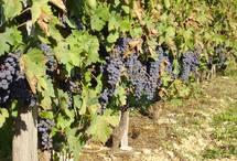 Viticulture d'Aquitaine: la DRAF tire le signal d'alarme