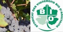 La grogne des vignerons bios d'Aquitaine