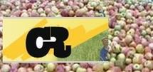 Arboriculture en crise:pommes amères à Agen