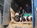 L'Aquitaine s'installe au Salon International de l'Agriculture