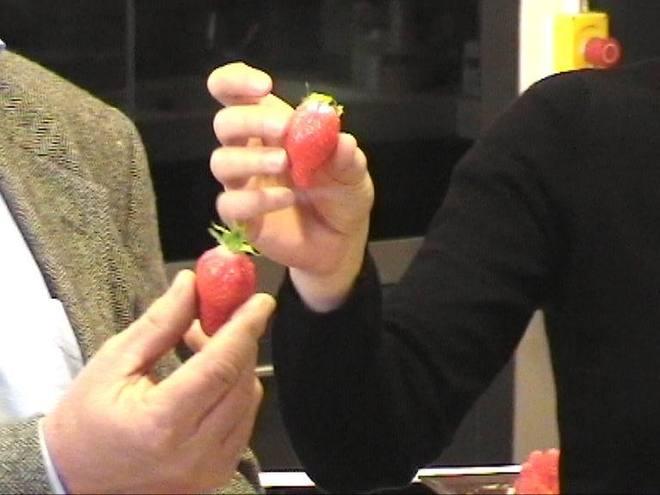 Gariguette et ciflorette, ces fraises qui font le printemps
