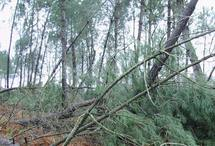 Prix du foncier: les forêts subissent l'effet tempête