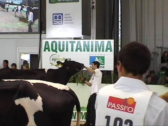 Aquitanima: concours Prim'Holstein sur fond de grandes inquiétudes