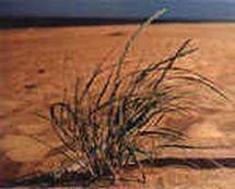 Mobilisation pour la sauvegarde  de la dune du Sokoburu à Hendaye