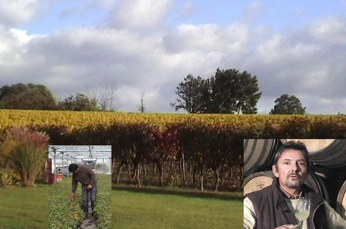Vinitech-Sifel à Bordeaux: les chemins qui vont de la vigne au vin