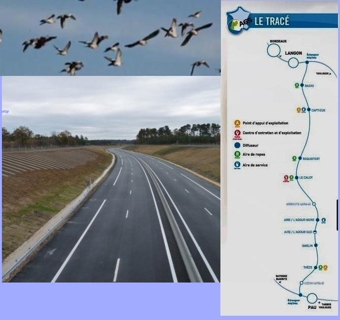 Ouverture de l'autoroute A65: les palombes vont-elles aimer ça?
