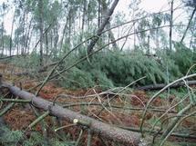 Une nouvelle interprofession forêt-bois en Aquitaine