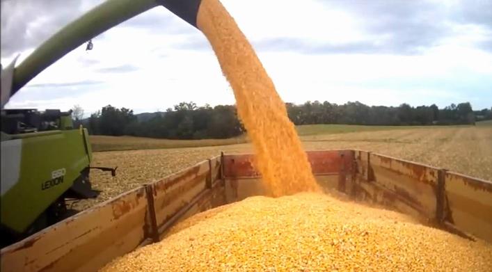 Récolte du maïs dans les Landes (capture d'écran vidéo You Tube Ralph P.)