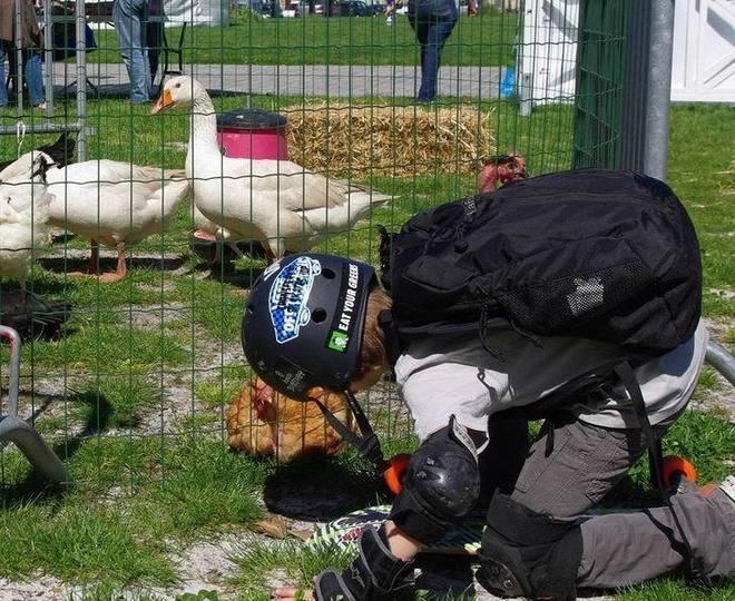 Sans doute un futur aviculteur.!.. (Ph Paysud)