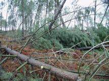 Après la tempête  dans les Landes (ph Paysud)