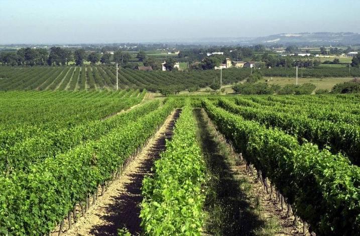 Belle vigne, beau paysage (Ph DR)