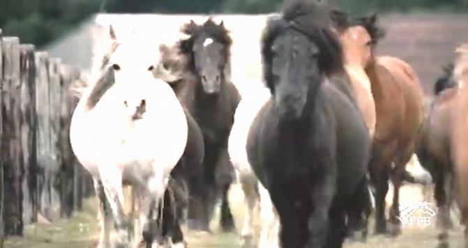 Capture d'écran vidéo FFE