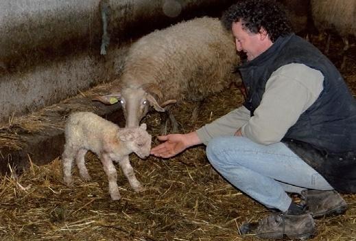 L' agneau de lait des Pyrénées monte à Paris lancer son IGP