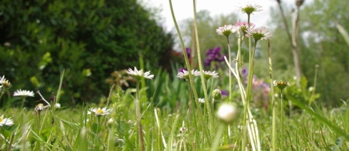 Prairie de printemps (Ph Paysud)