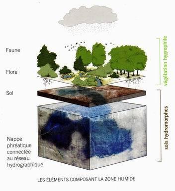 La zone humide (Guide Bordeaux-Métropole)