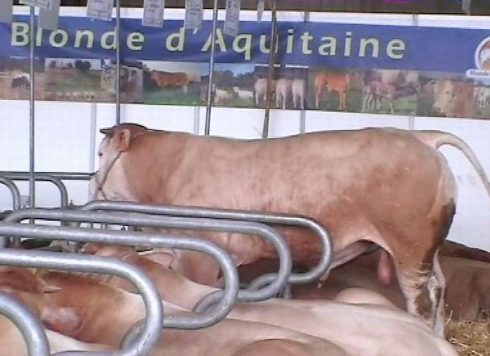 Inquiétant pour les éleveurs? (Ph PaysudTv)