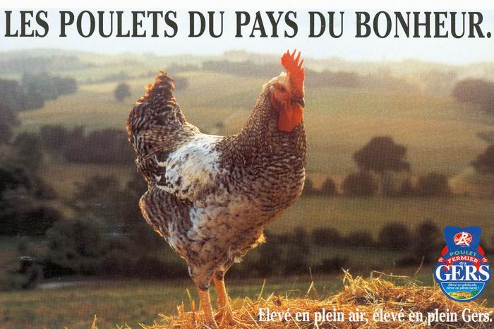Le poulet,le bonheur,le pré... (DR)