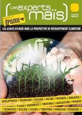 Les qualités anti-réchauffement climatique du maïs