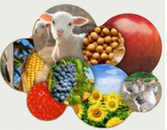 Agri SO Innovation:huit agrochaînes en chantier (DR)
