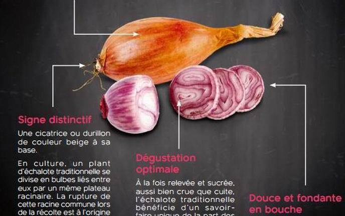 L'échalote traditonnelle... française (Document SN Echalote)