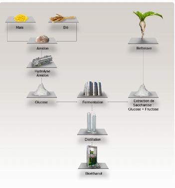 Principe de la production du bioéthanol (SNPAA)