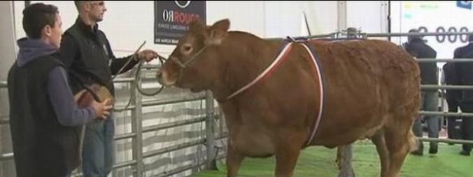 Au moment des enchère (capture d'écran vidéo FR 3 Limousin-Clicquer pour voir la vidéo