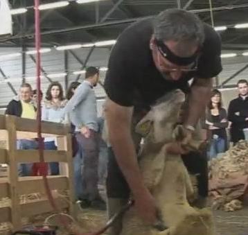 Tondeur au Salon de l'Agriculture d'Aquitaine (ph PaysudTv)