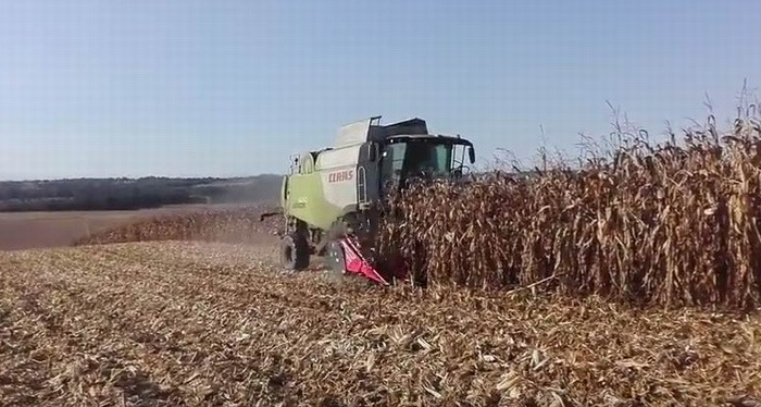 Récolte de maïs dans les Landes (capture d'écran vidéo You Tube P.Brocquet)