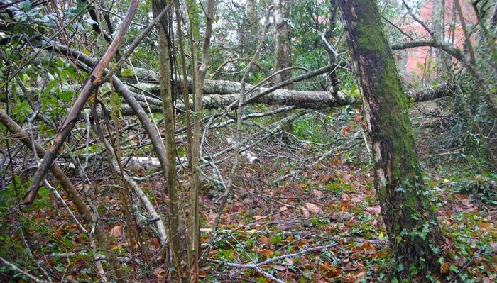 Dans un bois de bouleaux de l'Entre-deux-Mers (ph Paysud)