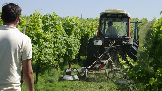 En route pour le zéro herbicide (ph Ch Agri 33)