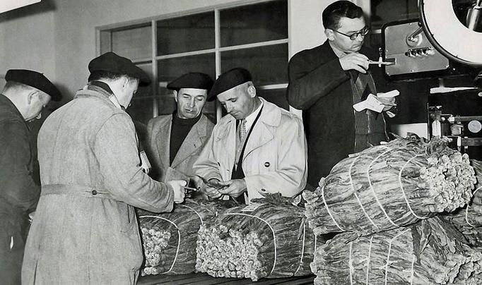 Expertise des tabacs à Cahors dans les années 60 (Ph Seita)