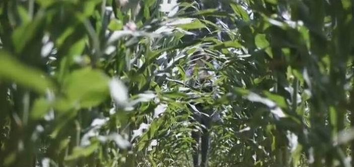 Capture d'écran vidéo AGPM