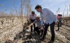 La région Occitanie au secours des viticulteurs victimes de la grêle