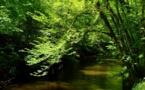 Ciron et LGV sud-ouest: la nature face à la modernité