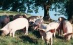 Le dessus du panier de l'Occitanie au Salon de l'Agriculture