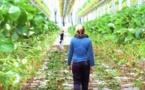 Comment le Lot-et-Garonne cultive l'emploi agricole