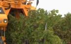 Carole Delga alerte le Premier ministre sur l'entrée des vins  sans identification