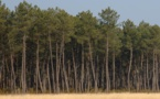 La capacité d'absorption du CO2 par les arbres en question