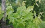 Le vignoble bordelais durement frappé par le gel