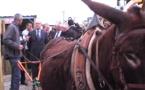 L'âne qui amuse Alain Juppé