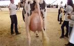 La montée de colère des producteurs de lait du sud-ouest