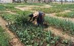 Quand la musique contribue à l'amélioration de la nutrition au Burkina Faso
