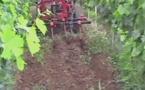 """La Gironde encourage le """"zéro herbicide"""""""